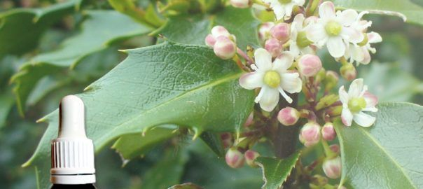 flores de bach acebo holly